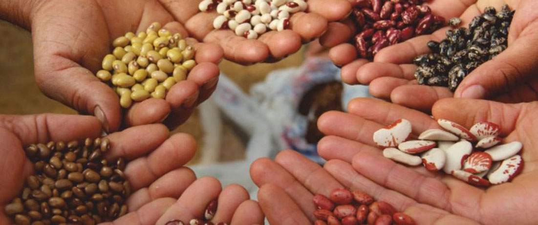 Biodiversità: è patrimonio della nostra agricoltura che va celebrato ma soprattutto salvaguardato